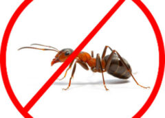 Hub Site Services – Choose the Best Pest Control Company for Your Commercial Building